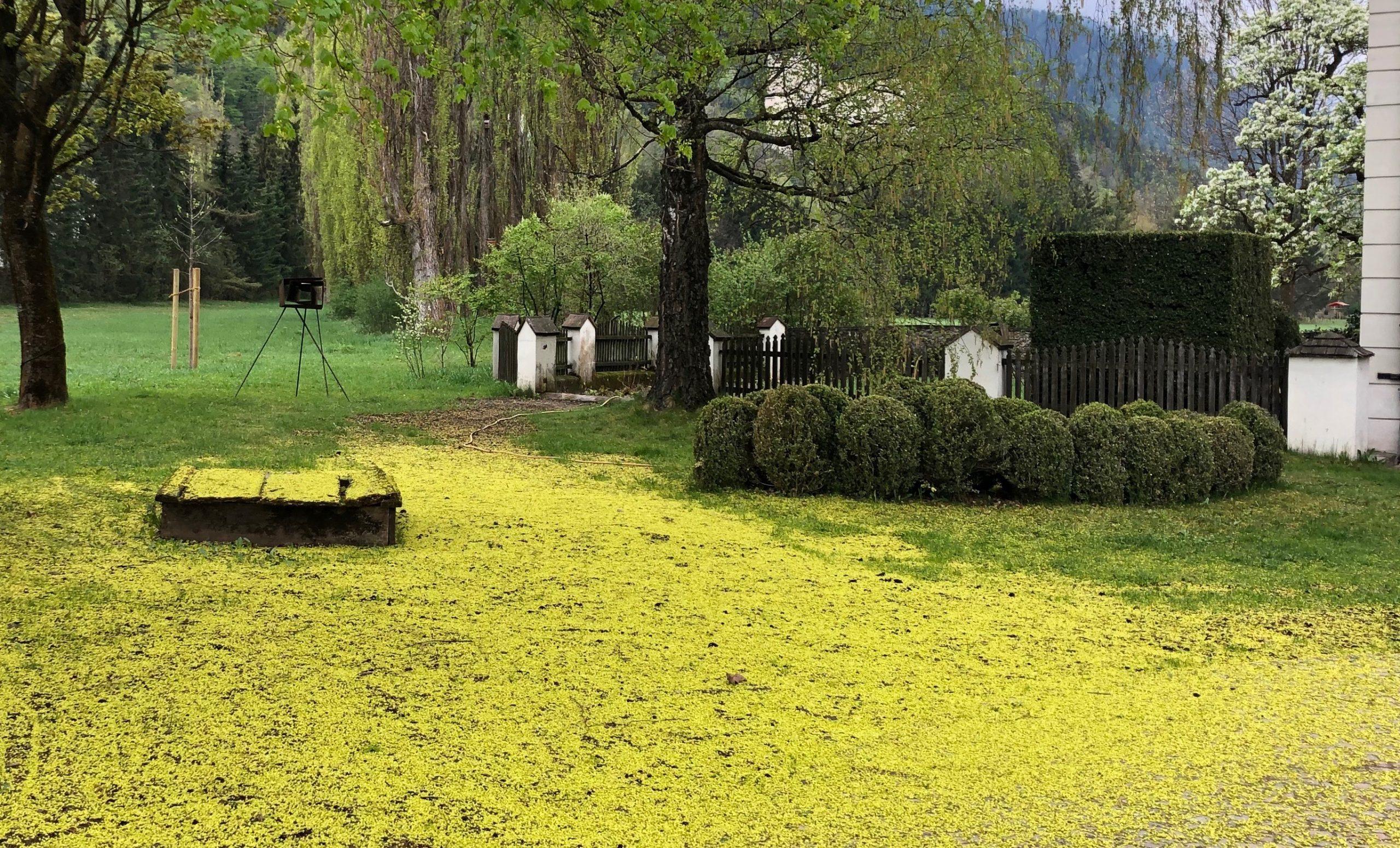 Frühling in Lienz mit Blüten